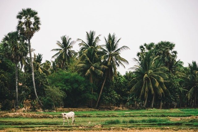 What is Natural farming?
