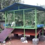 elevated goat shed, goat shed, goat house plan, simple goat house, cheap goat shed, cheap goat house, goat house india, goat shelter, goat farming, raise goats for profit, raise goats for milk, raise goats for meat, goat care, goat feed , start goat farm, meat goat farming, successful goat farm