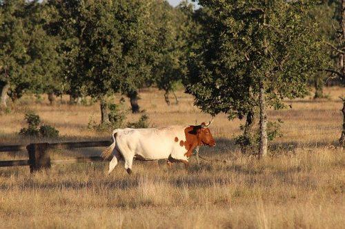 Mixed farming and its Advantages