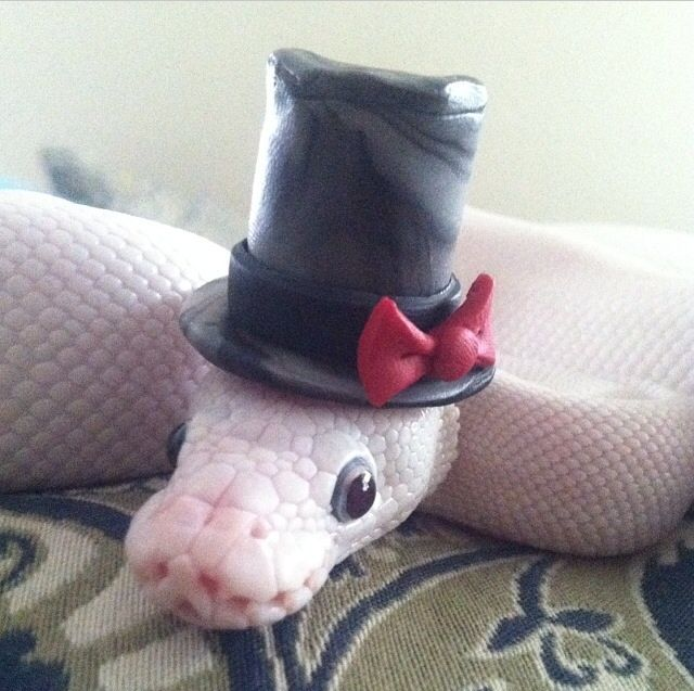 Cute snake with hat part 2