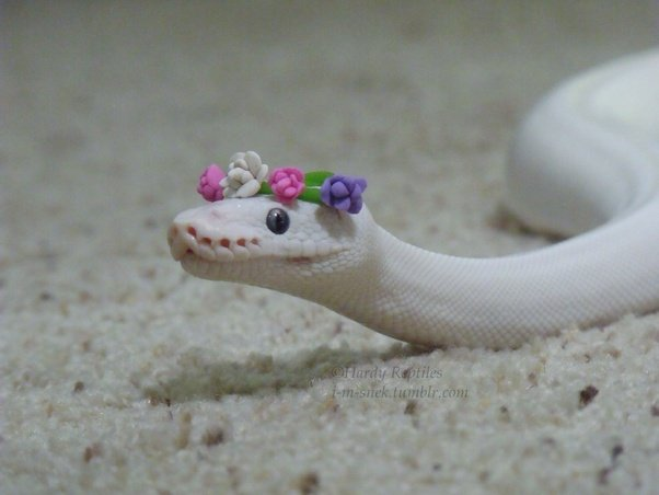 white snake with flowers