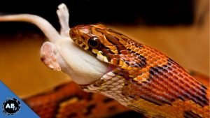What do Snakes Eat